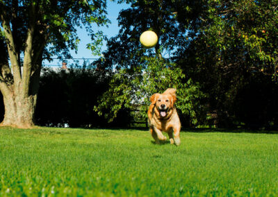 65384_Namgrass_Retouched_Dog_Running_800x800_V1